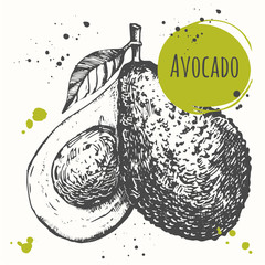 Avocado. Hand drawn fresh organic vegetables. Vegan food.