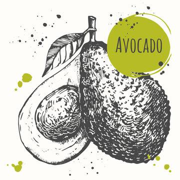 Avocado. Hand drawn fresh organic vegetables. Vegan food.