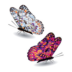 Two colorful butterflies.