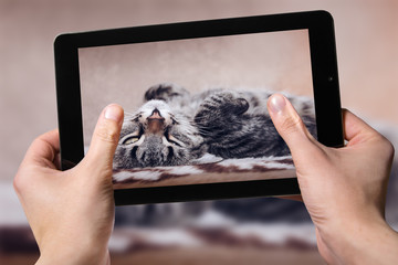 Hold black tablet on hands. Shooting home cat