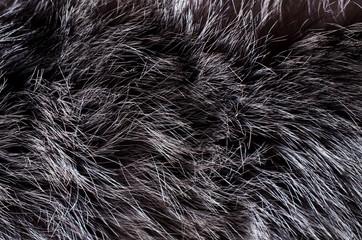 Background of dark fur