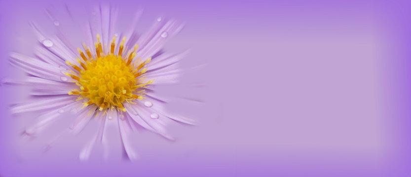 Light purple flower banner