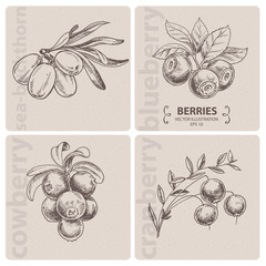 Autumn Berries, hand drawn