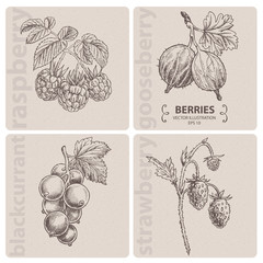 SummerBerries, hand drawn
