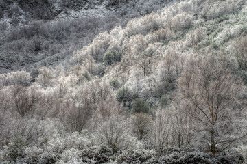 Frozen forest on a winter morning