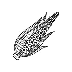 Hand drawn corn sketches on white background