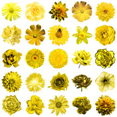 Mix collage of natural and surreal yellow flowers 25 in 1: peony, dahlia, primula, aster, daisy, rose, gerbera, clove, chrysanthemum, cornflower, flax, pelargonium isolated on white