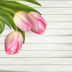 Fresh pink tulips. EPS 10