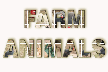 farm animal text