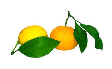 Orange tangerine with leaf and lemon on white background. Waterc
