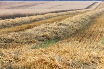 haystacks in a field of straw