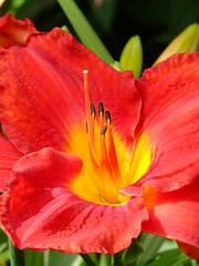 The Inner Flower