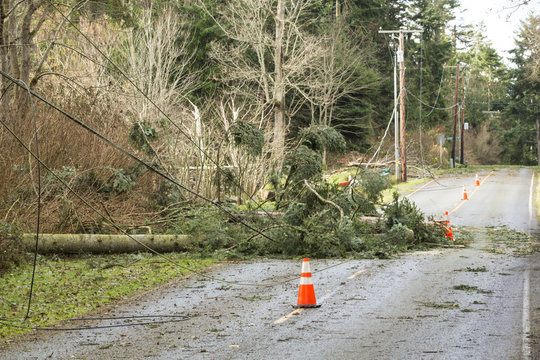 Fallen trees and downed power lines blocking a road; hazards after a natural disaster wind storm
