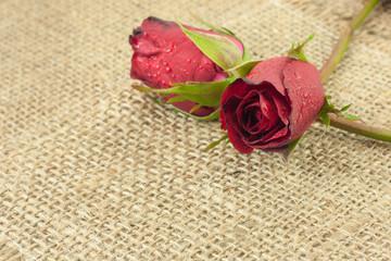 Red rose on vintage sackcloth background.
