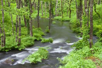 初夏の裏磐梯、新緑の長瀬川