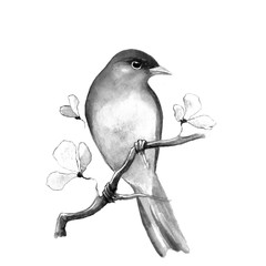 Bird on branch 3. Black and white watercolor sketch