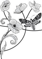 death's head hawk moth and poppy