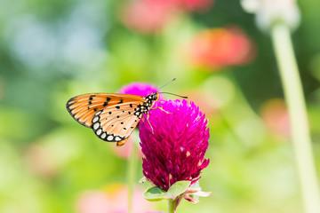 small orange butterfly on purple flower.
