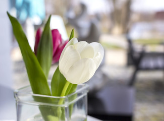 Pink and white tulip stands in a vase on a table.