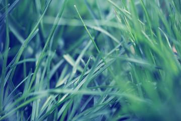 green grass full screen