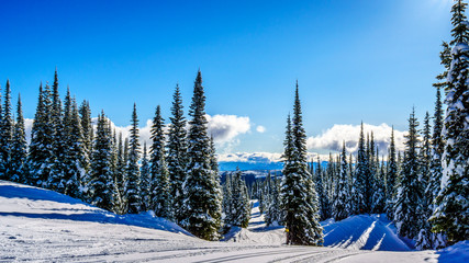 Wall Mural - Wide snowfields, snow covered trees and deep snow pack in the high alpine ski area at Sun Peaks in the Shuswap Highlands of central British Columbia, Canada