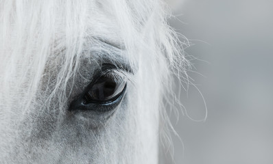 Eye of white mustang