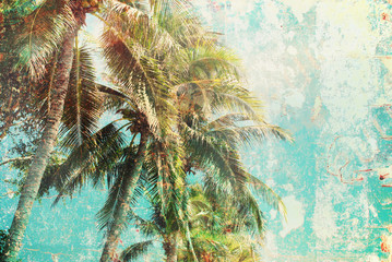 Tropical Trees Blue Sky Vintage Effect Background