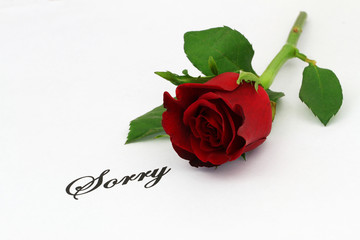 Word sorry written on white piece of paper with a red rose
