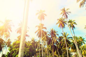 Tropical Palms Trees Jungle Toned Landscape