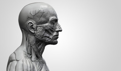 Human anatomy - muscle anatomy of the face neck and chest side view in black and white 3d realistic rendering