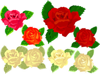 Roses of different colors.