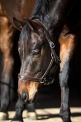 horse portrait on black background