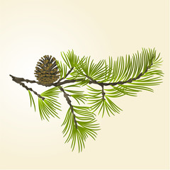 Branch Pine with pine cone vector