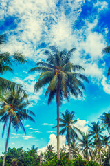 palm trees on a beautiful clunds