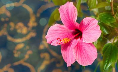 beautiful large flower