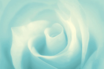 Pure soft background with turquoise rose. Vector