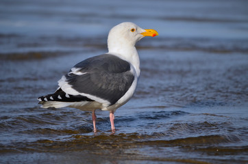 A seagull stands on the beach
