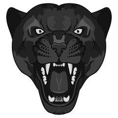 Panther Portrait. Angry wild big cat