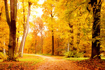 Winding Footpath Path in Forest in Fall with vibrant autumn foliage colors