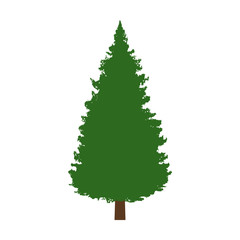 Evergreen conifer / pine tree flat color icon for apps and websites