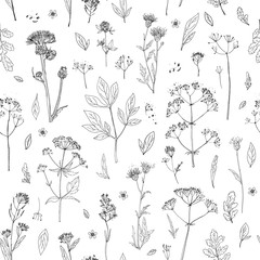 Pattern Herbs and flowers painted black line. Space for text. Vector drawing. Template with a sketch of herbs.