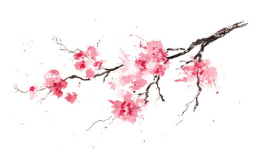 Sakura branch. Original watercolor painting. Wall mural