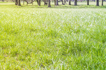 Spring new grass