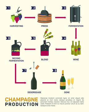 Vector illustration of wine making. How is made, infographic elements