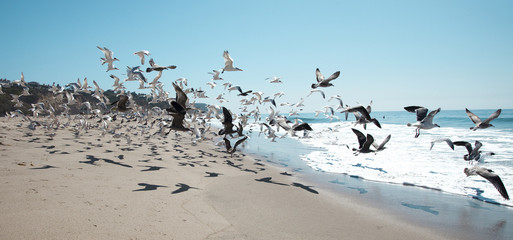 Seagulls Flying at the Beach