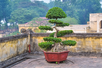 Bonsai - a classic decoration expensive homes in Asia