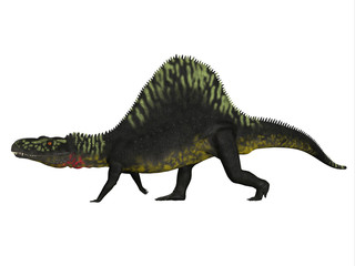 Arizonasaurus Side Profile - Arizonasaurus was a sailback carnivorous archosaur that lived in Arizona, North America in the Triassic Period.