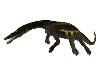 Nothosaurus Side Profile - Nothosaurus was a semi-aquatic carnivorous reptile that lived in the Triassic Period of North Africa, Europe and China.