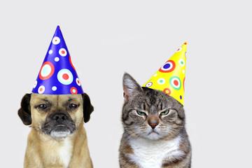 Faschingsmuffel: Hund und Katze mit Partyhütchen und schlechter Laune