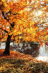 Autumn picturesque landscape with oak trees in sunny weather